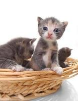 söta nyfödda kattungar isoleras lätt på vitt foto