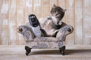 bedårande kattunge som kopplar av i soffan med fjärrkontrollen foto