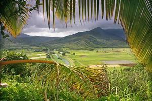 tarofält i kauai foto