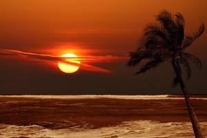 ensam palm vid soluppgången med dramatiska färger foto