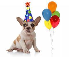 hund med födelsedagsfest hatt och ballonger foto