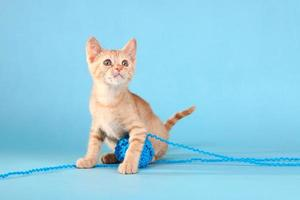 lilla orange tabby kattunge i studion foto