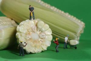 miniatyrbyggnadsarbetare i konceptuella matbilder med majs foto