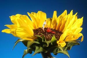 plastmänniska som klipper gräs på en solros foto