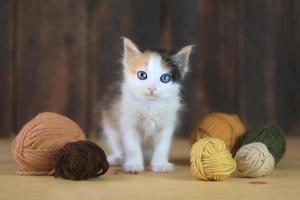 liten calico -kattunge med garn på en träbakgrund foto