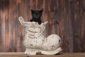 bedårande kattunge i en gammal stövelsko på träbakgrund foto