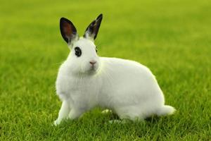 vit kanin utomhus i gräs foto