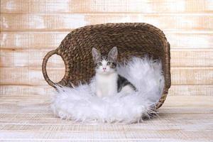 korthårig kattunge med stora ögon foto