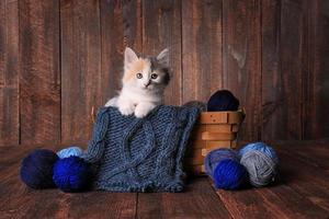 söt bedårande kattunge foto