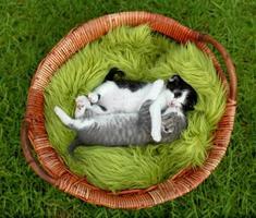små kattungar som kramas utomhus i naturligt ljus foto