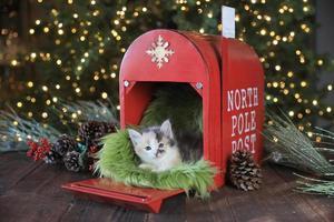 söt kattunge vid jul foto