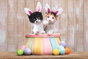 söta par kattungar inuti en påskkorg foto