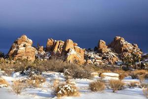 snöigt landskap i Joshua Tree National Park foto