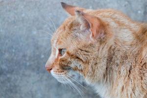 orange katt på gatan foto