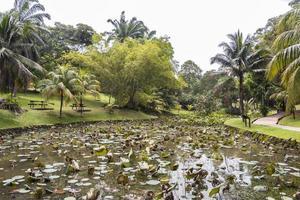 tropisk dammsjö med vattenväxter, Perdana botaniska trädgård, Malaysia foto