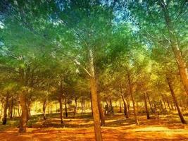 träträd utomhus foto