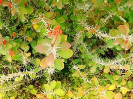 växter i trädgården foto