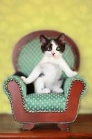 kattunge sitter på en stol foto