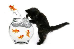 mischiv söt kattunge foto