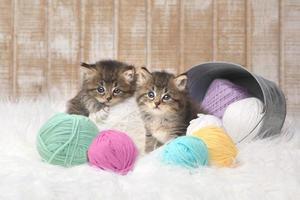 kattungar med bollar av garn i studion foto