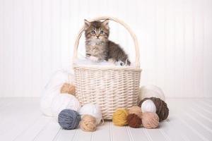 söt kattunge i en korg med garn på vitt foto
