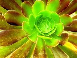 utomhusväxt i trädgården foto