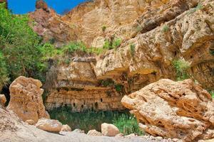 oas av ein gedi nationalpark i israel foto