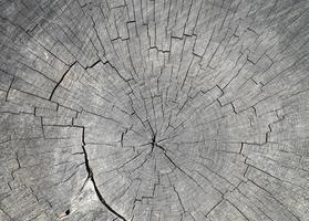 gammal grå trädstam klippa konsistens foto