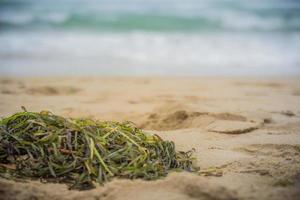 närbild av alger på strandsanden foto