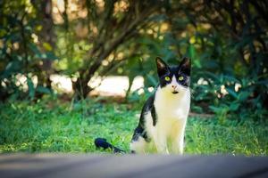 svartvit katt på det gröna gräset på bakgården foto