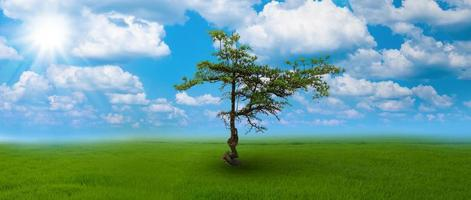 det ensamma trädet på bördig mark vid den blå himlen och molnbakgrunden foto