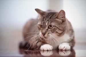 arg grå randig katt med gröna ögon. foto
