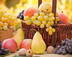 höstfrukter - ekologiska frukter foto