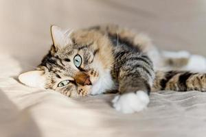 katt som ligger på sängen foto