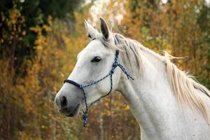 vit häst på betesporten foto