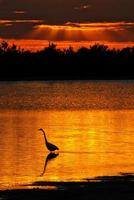 florida solnedgång fågelur foto