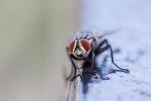 närbild av en fluga foto