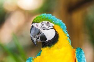 papegoja ara. foto