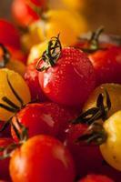 organiska arvtomater med körsbärsröda tomater foto