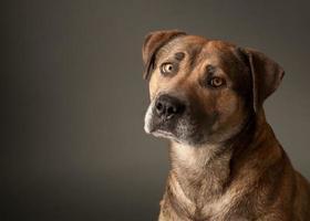 blandad rashund foto