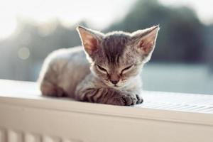 baby kattunge foto