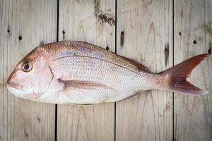 hel rå snapper fisk foto