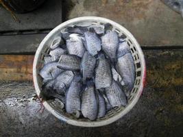 torkad fisk foto