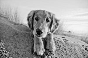 hund dagar foto
