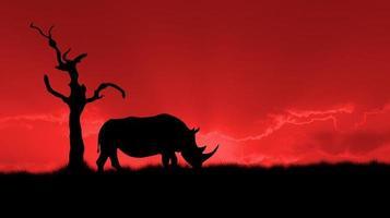 afrikansk noshörning silhuett foto
