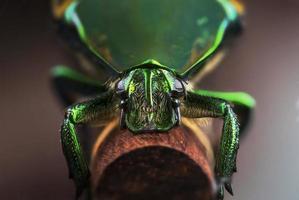 grön skalbagge foto