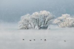 frostiga träd i floden foto
