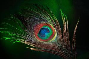påfågel fjäder foto