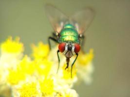 makro skott av en fluga foto