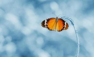 fjäril är en vacker och suddig bakgrund. foto